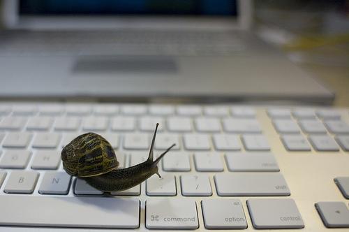 snail-computer